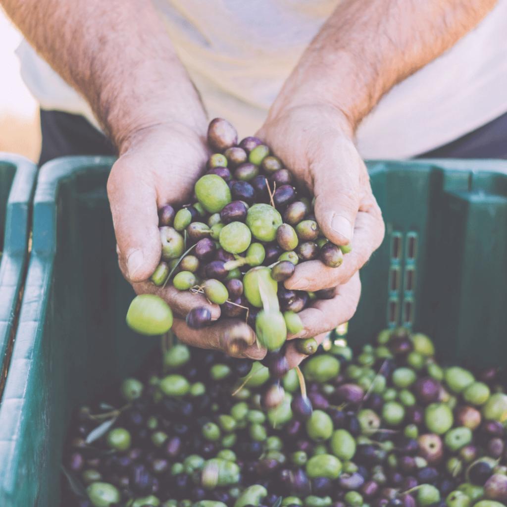olives on keto diet